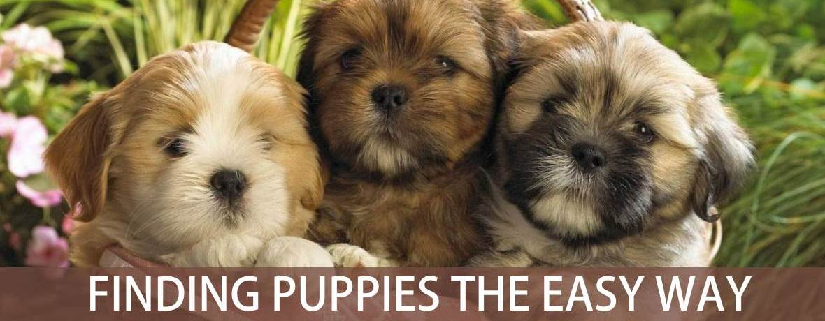 Search for puppies in South Africa