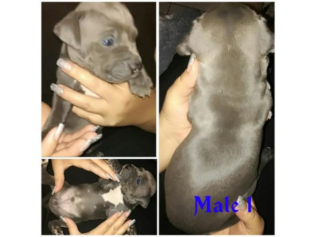 We have 5 Blue & White SADBA Registered P...